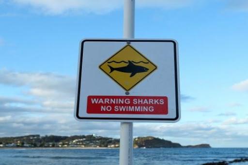 وفاة راكب أمواج على يد سمكة قرش في أستراليا