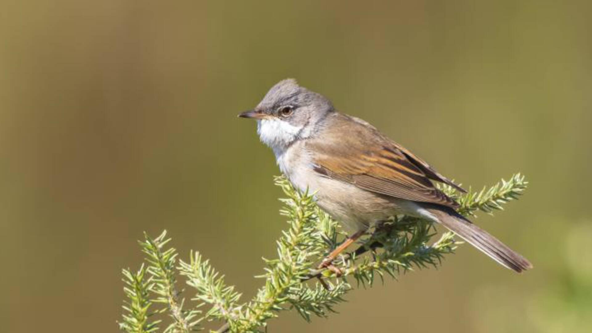 اكتشاف فايروس لأول مرة في الطيور في هولندا