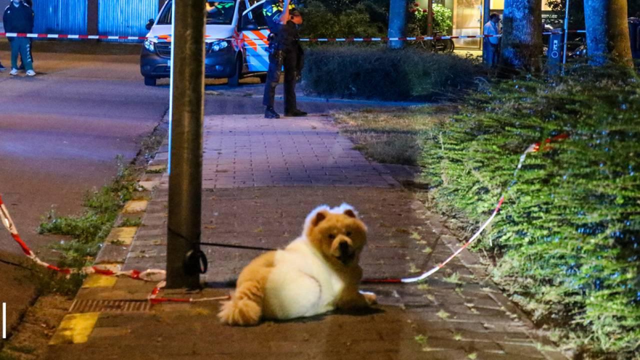 قُتل برصاصة بينما كان يمشي مع كلبه